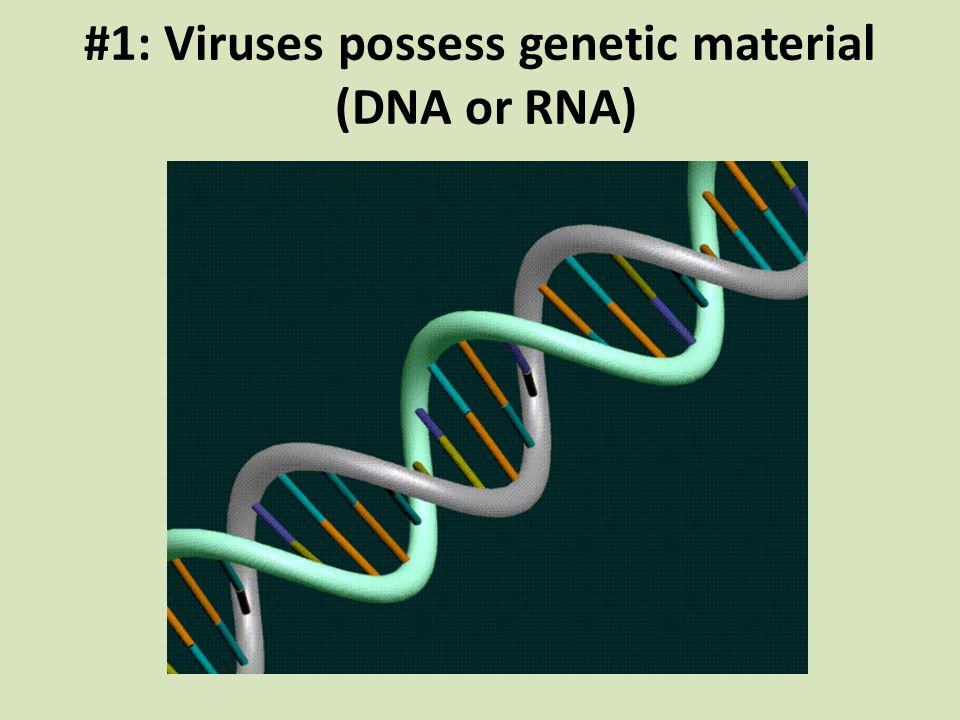 #1: Viruses possess genetic material (DNA or RNA)