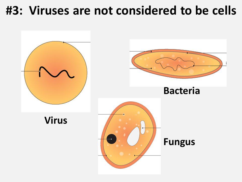 Virus Bacteria Fungus