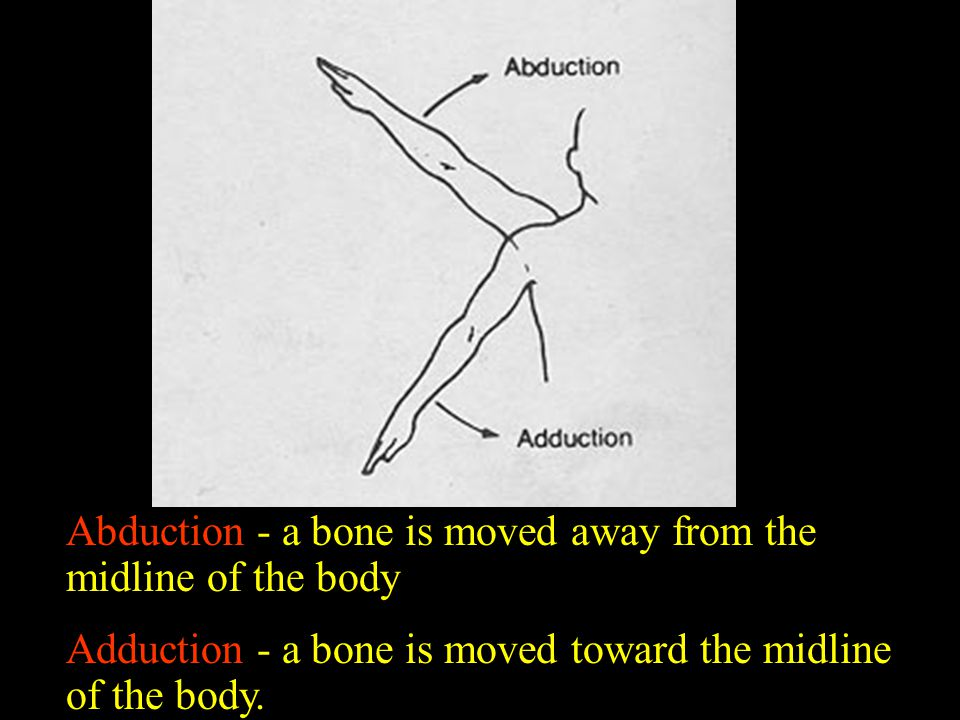 Abduction - a bone is moved away from the midline of the body Adduction - a bone is moved toward the midline of the body.