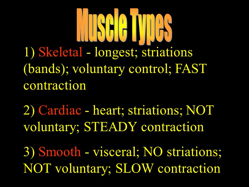 1) Skeletal - longest; striations (bands); voluntary control; FAST contraction 2) Cardiac - heart; striations; NOT voluntary; STEADY contraction 3) Sm