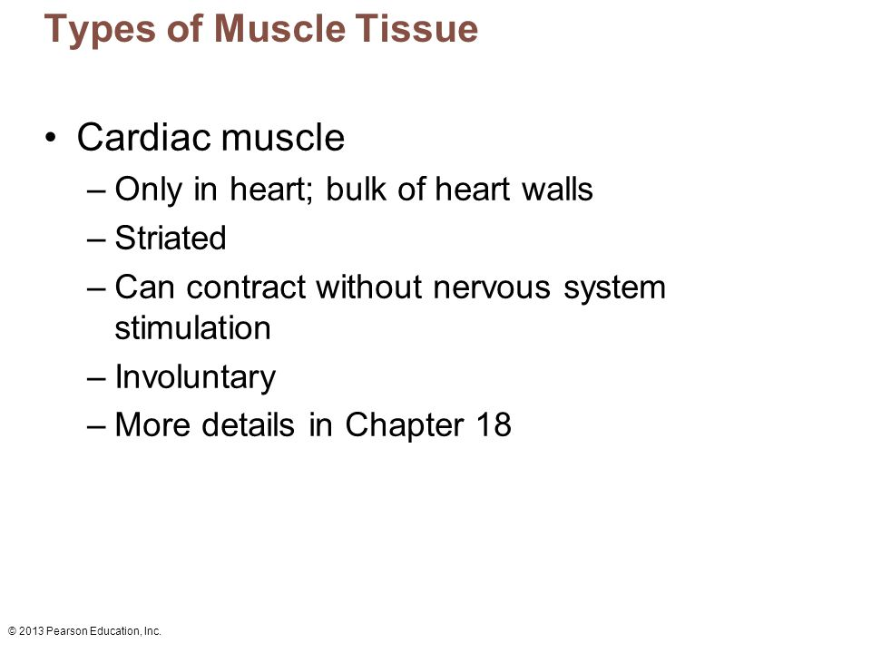 © 2013 Pearson Education, Inc. Types of Muscle Tissue Cardiac muscle –Only in heart; bulk of heart walls –Striated –Can contract without nervous syste