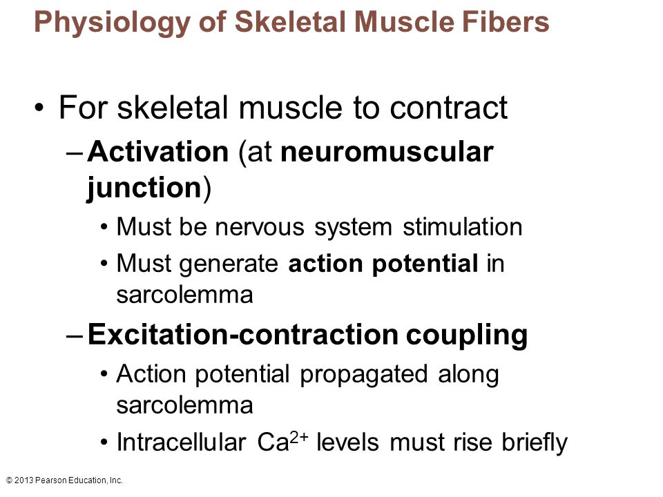 © 2013 Pearson Education, Inc. Physiology of Skeletal Muscle Fibers For skeletal muscle to contract –Activation (at neuromuscular junction) Must be ne