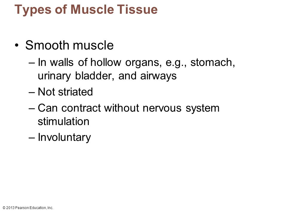 © 2013 Pearson Education, Inc. Types of Muscle Tissue Smooth muscle –In walls of hollow organs, e.g., stomach, urinary bladder, and airways –Not stria