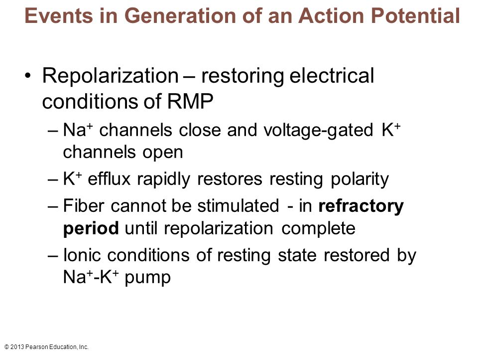 © 2013 Pearson Education, Inc. Events in Generation of an Action Potential Repolarization – restoring electrical conditions of RMP –Na + channels clos