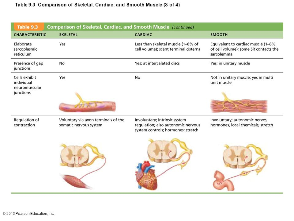 © 2013 Pearson Education, Inc. Table 9.3 Comparison of Skeletal, Cardiac, and Smooth Muscle (3 of 4)