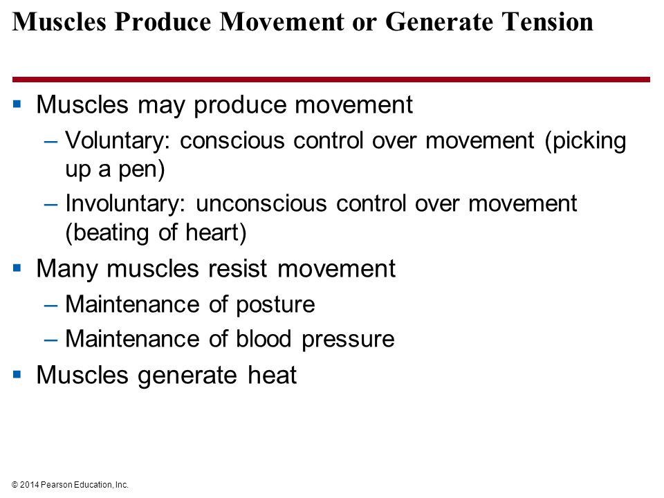 © 2014 Pearson Education, Inc. Muscles Produce Movement or Generate Tension  Muscles may produce movement –Voluntary: conscious control over movement