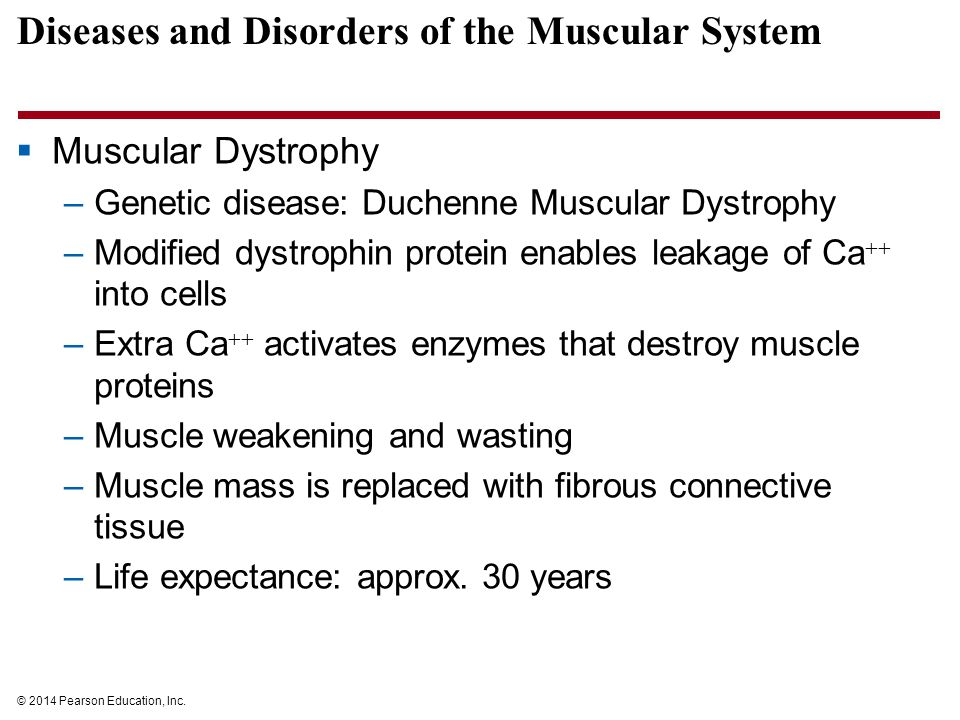 © 2014 Pearson Education, Inc. Diseases and Disorders of the Muscular System  Muscular Dystrophy –Genetic disease: Duchenne Muscular Dystrophy –Modif