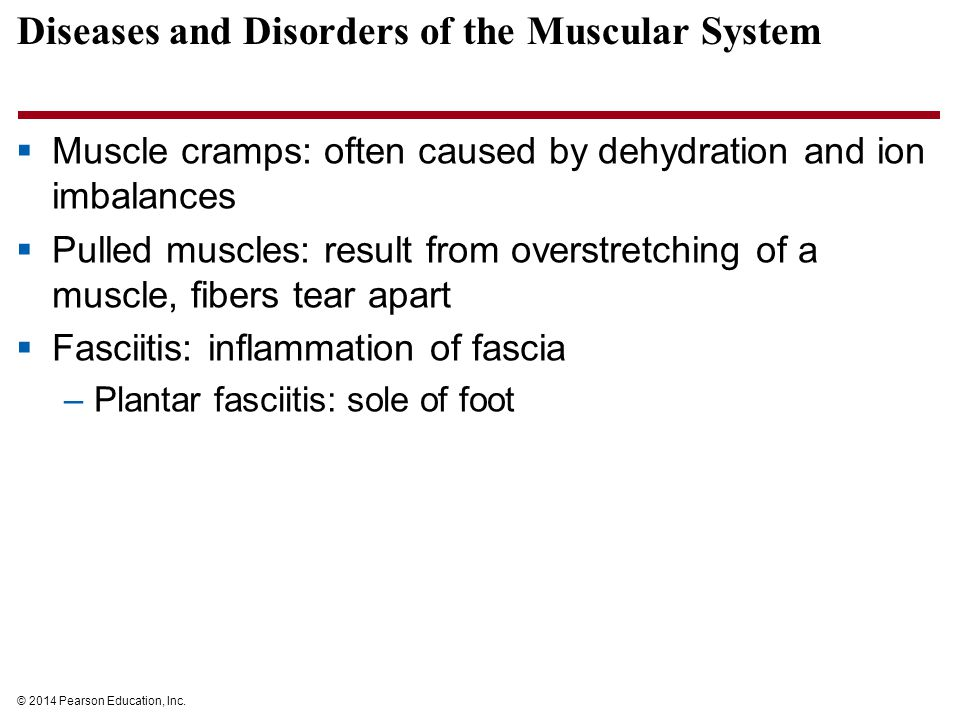 © 2014 Pearson Education, Inc. Diseases and Disorders of the Muscular System  Muscle cramps: often caused by dehydration and ion imbalances  Pulled