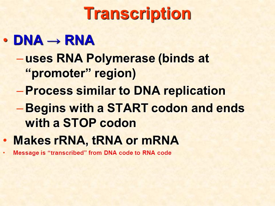 Transcription DNA → RNADNA → RNA –uses RNA Polymerase (binds at promoter region) –Process similar to DNA replication –Begins with a START codon and ends with a STOP codon Makes rRNA, tRNA or mRNAMakes rRNA, tRNA or mRNA Message is transcribed from DNA code to RNA codeMessage is transcribed from DNA code to RNA code
