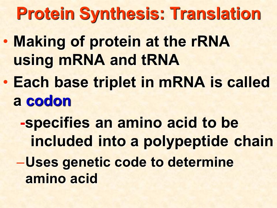 Protein Synthesis: Translation Making of protein at the rRNA using mRNA and tRNAMaking of protein at the rRNA using mRNA and tRNA Each base triplet in mRNA is called a codonEach base triplet in mRNA is called a codon -specifies an amino acid to be included into a polypeptide chain -specifies an amino acid to be included into a polypeptide chain –Uses genetic code to determine amino acid