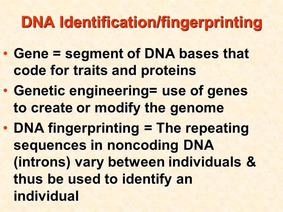 DNA Identification/fingerprinting Gene = segment of DNA bases that code for traits and proteinsGene = segment of DNA bases that code for traits and proteins Genetic engineering= use of genes to create or modify the genomeGenetic engineering= use of genes to create or modify the genome DNA fingerprinting = The repeating sequences in noncoding DNA (introns) vary between individuals & thus be used to identify an individualDNA fingerprinting = The repeating sequences in noncoding DNA (introns) vary between individuals & thus be used to identify an individual