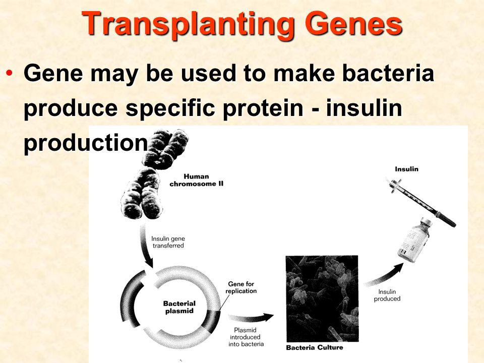Gene may be used to make bacteria produce specific protein - insulin productionGene may be used to make bacteria produce specific protein - insulin production Transplanting Genes