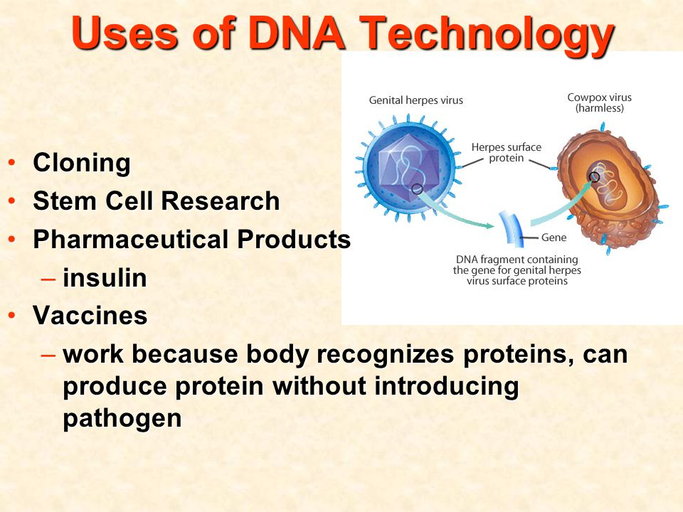 Uses of DNA Technology CloningCloning Stem Cell ResearchStem Cell Research Pharmaceutical ProductsPharmaceutical Products –insulin VaccinesVaccines –work because body recognizes proteins, can produce protein without introducing pathogen