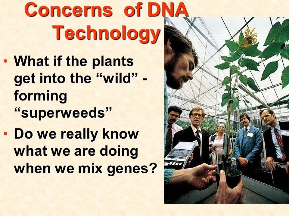 Concerns of DNA Technology What if the plants get into the wild - forming superweeds What if the plants get into the wild - forming superweeds Do we really know what we are doing when we mix genes Do we really know what we are doing when we mix genes
