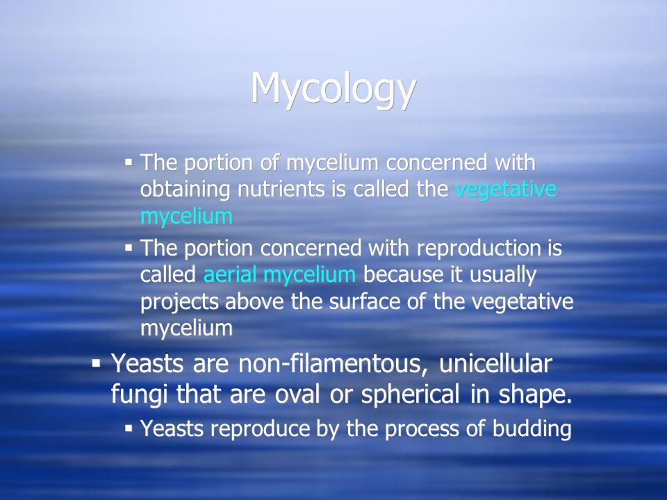 Mycology  When the buds fail to detach from each other, pseudohyphae are seen  Dimorphic fungi  Some fungi, including most of the pathogenic fungi, exhibit two forms of growth.