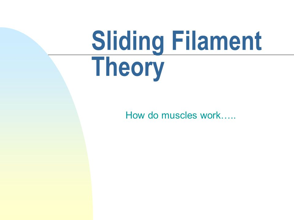 Sliding Filament Theory How do muscles work…..