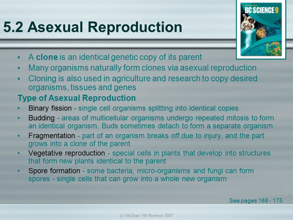 (c) McGraw Hill Ryerson 2007 5.2 Asexual Reproduction A clone is an identical genetic copy of its parent Many organisms naturally form clones via asex