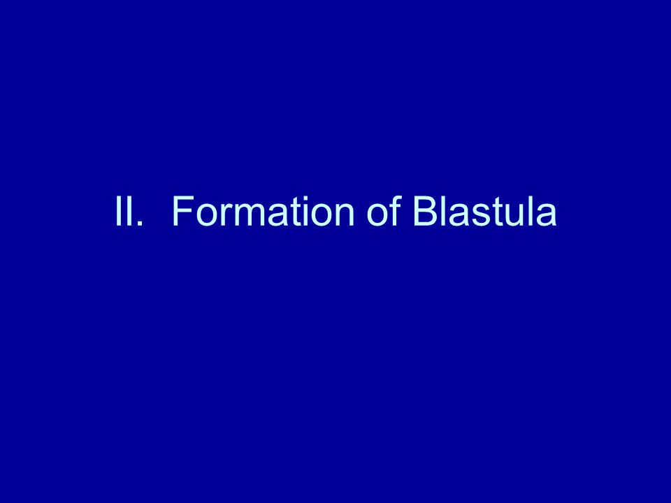 II. Formation of Blastula