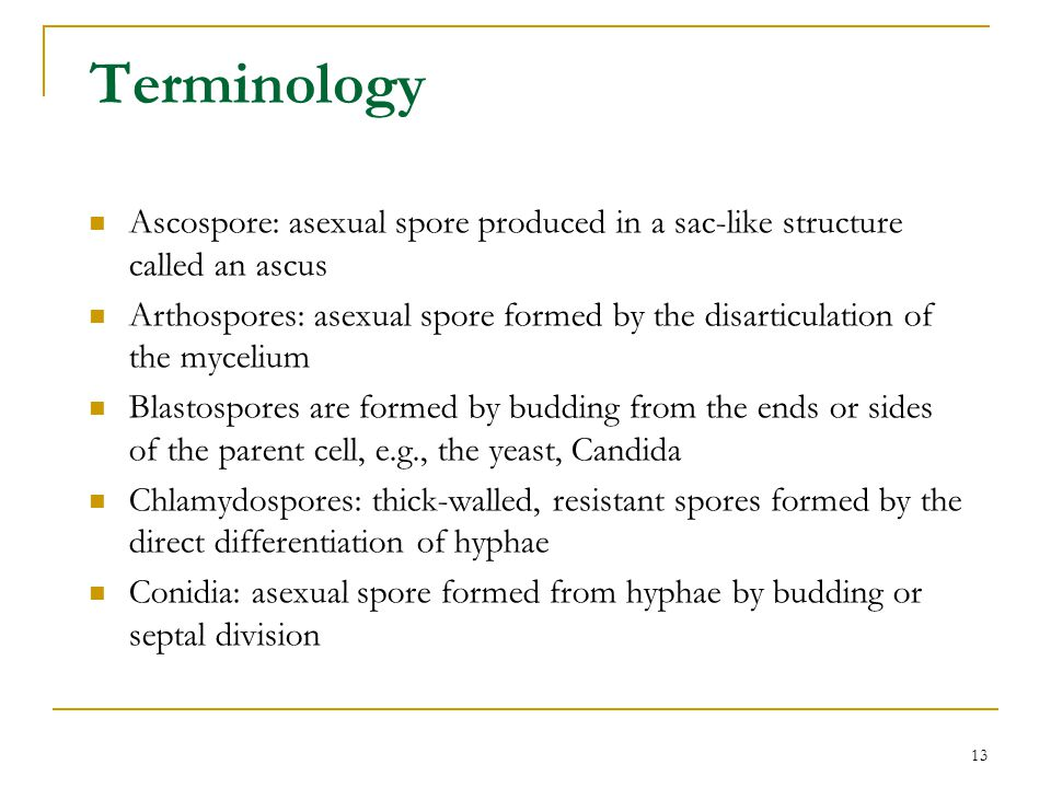13 Terminology Ascospore: asexual spore produced in a sac-like structure called an ascus Arthospores: asexual spore formed by the disarticulation of t