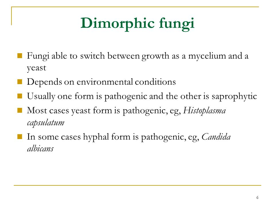 6 Dimorphic fungi Fungi able to switch between growth as a mycelium and a yeast Depends on environmental conditions Usually one form is pathogenic and