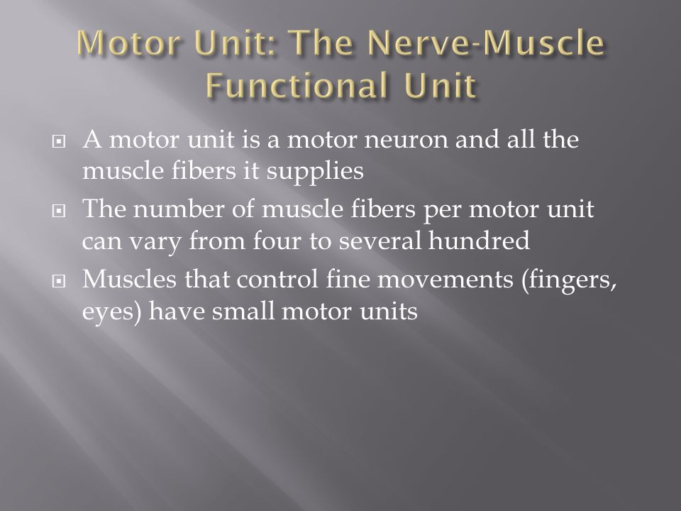  A motor unit is a motor neuron and all the muscle fibers it supplies  The number of muscle fibers per motor unit can vary from four to several hund