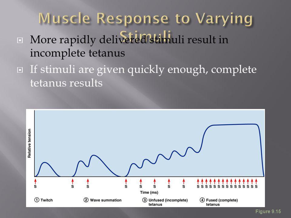  More rapidly delivered stimuli result in incomplete tetanus  If stimuli are given quickly enough, complete tetanus results Figure 9.15