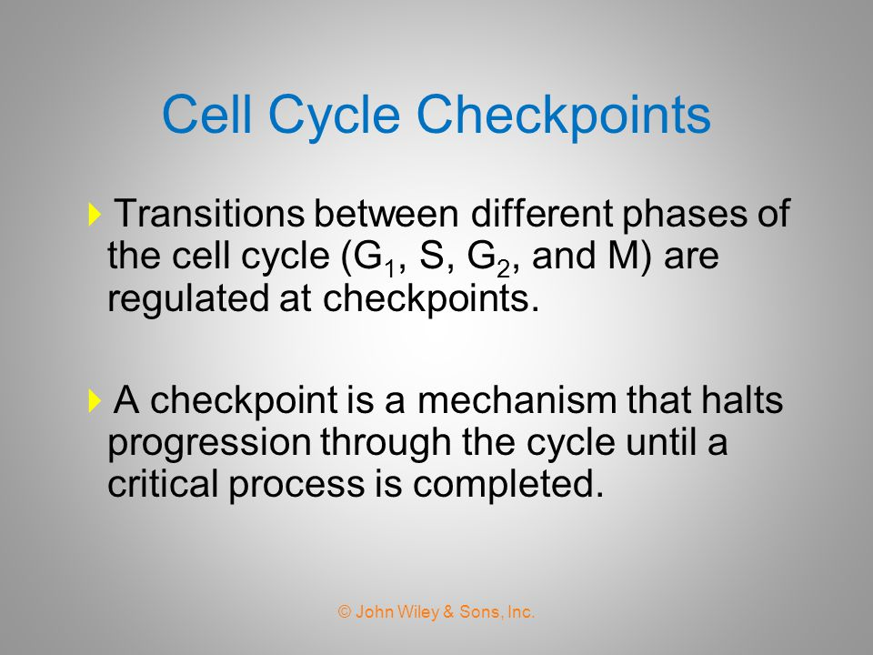 Cell Cycle Checkpoints  Transitions between different phases of the cell cycle (G 1, S, G 2, and M) are regulated at checkpoints.