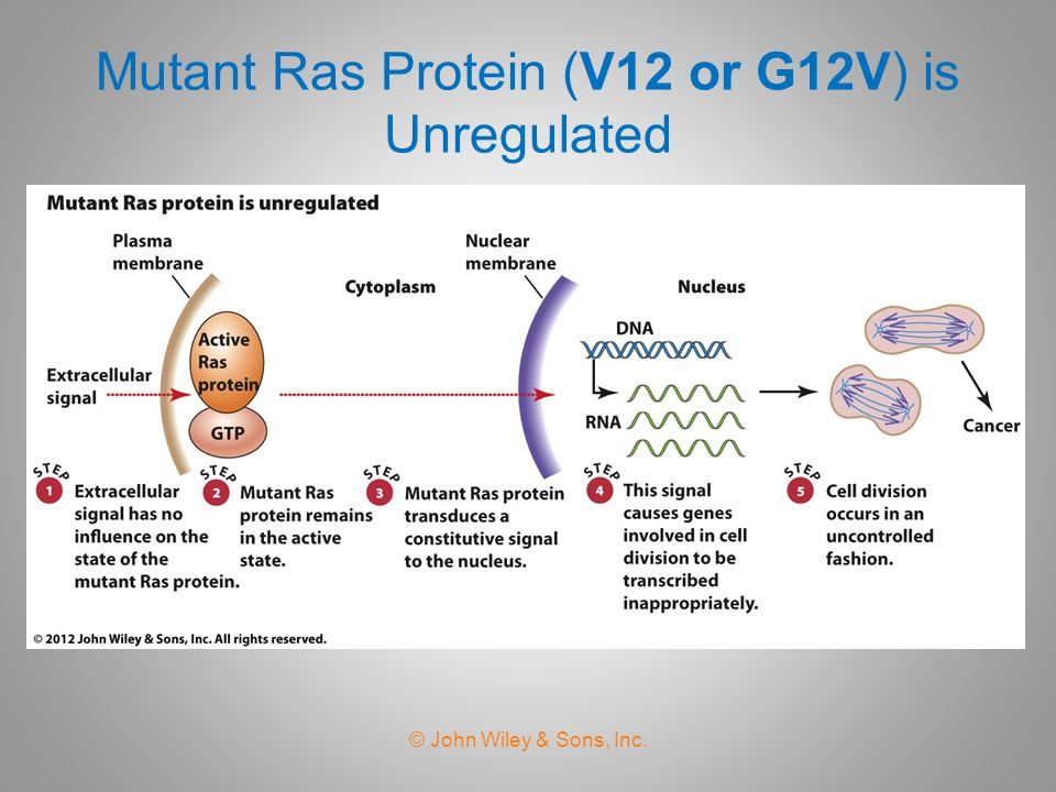 Mutant Ras Protein (V12 or G12V) is Unregulated © John Wiley & Sons, Inc.