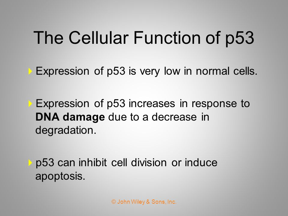 The Cellular Function of p53  Expression of p53 is very low in normal cells.  Expression of p53 increases in response to DNA damage due to a decreas