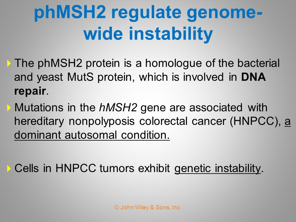 phMSH2 regulate genome- wide instability  The phMSH2 protein is a homologue of the bacterial and yeast MutS protein, which is involved in DNA repair.