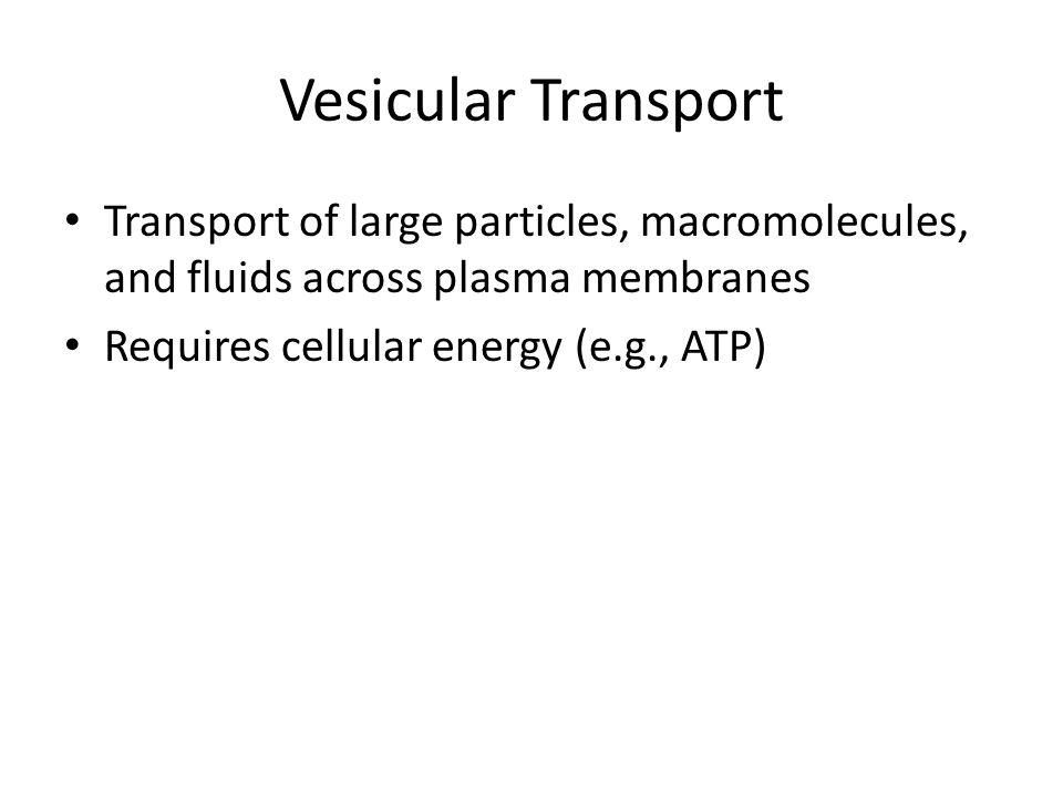 Vesicular Transport Transport of large particles, macromolecules, and fluids across plasma membranes Requires cellular energy (e.g., ATP)