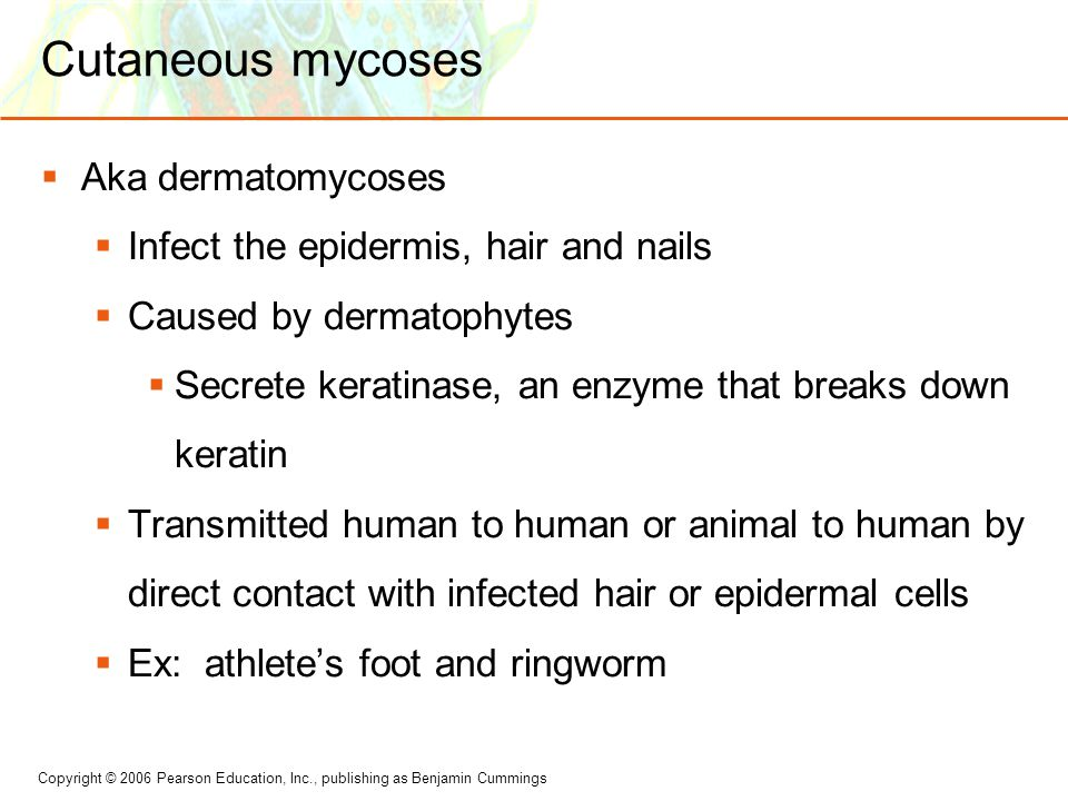 Copyright © 2006 Pearson Education, Inc., publishing as Benjamin Cummings Cutaneous mycoses  Aka dermatomycoses  Infect the epidermis, hair and nails  Caused by dermatophytes  Secrete keratinase, an enzyme that breaks down keratin  Transmitted human to human or animal to human by direct contact with infected hair or epidermal cells  Ex: athlete's foot and ringworm