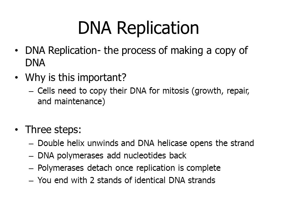DNA Replication DNA Replication- the process of making a copy of DNA Why is this important.