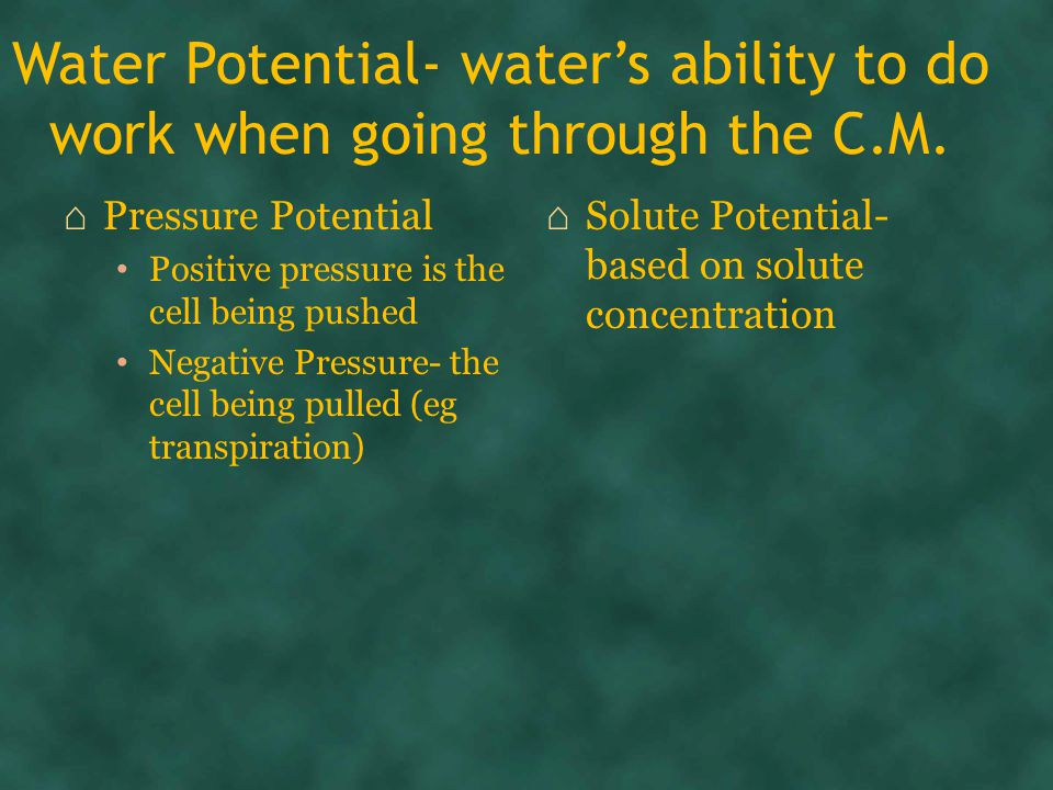 Water Potential- water's ability to do work when going through the C.M.
