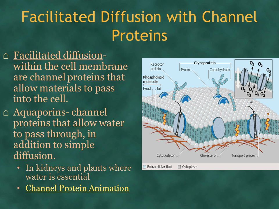 Facilitated Diffusion with Channel Proteins ⌂ Facilitated diffusion- within the cell membrane are channel proteins that allow materials to pass into the cell.