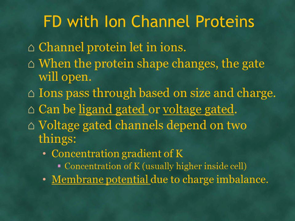 FD with Ion Channel Proteins ⌂ Channel protein let in ions.