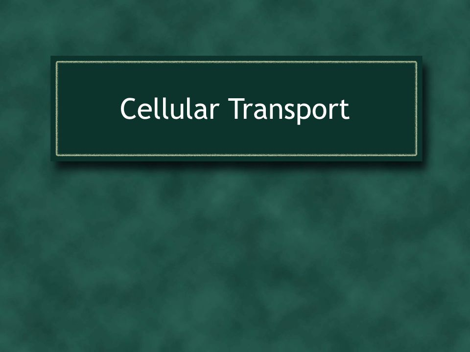 Cellular Transport