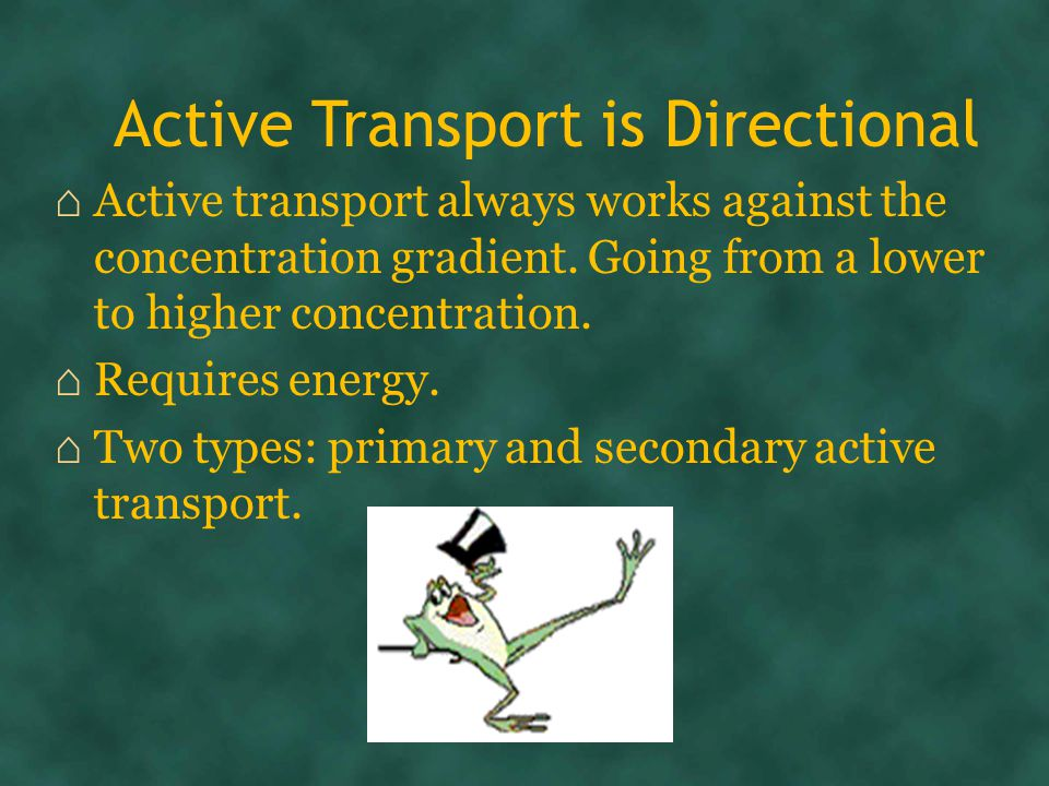 Active Transport is Directional ⌂ Active transport always works against the concentration gradient.