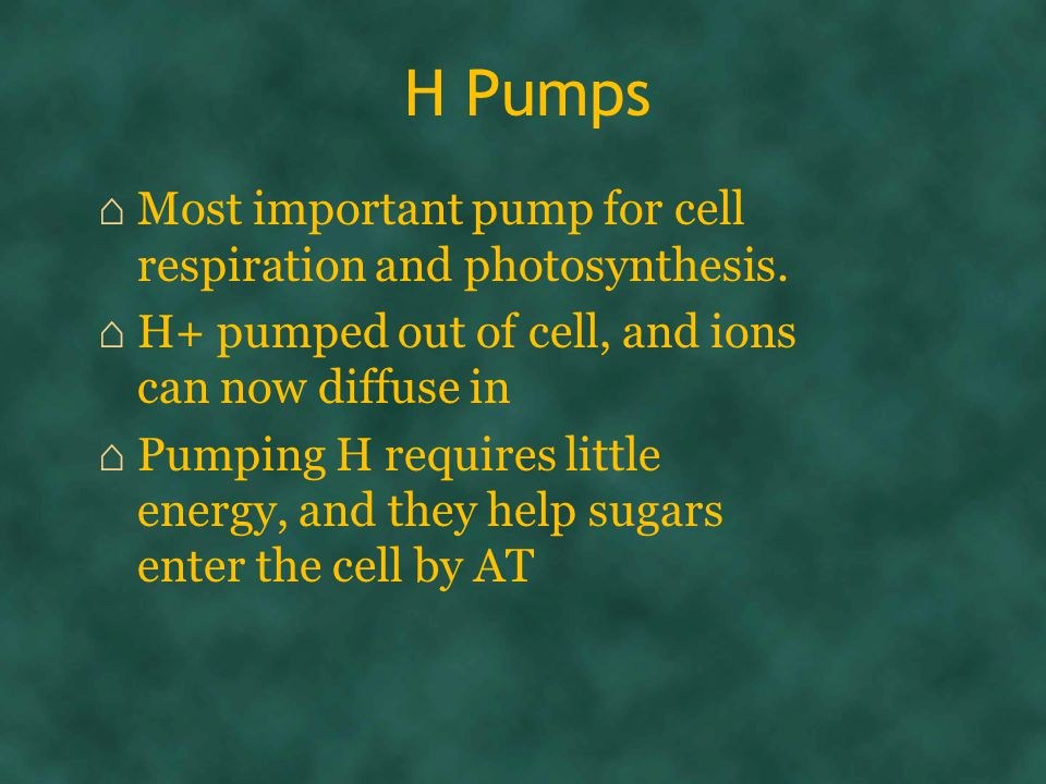 H Pumps ⌂ Most important pump for cell respiration and photosynthesis.