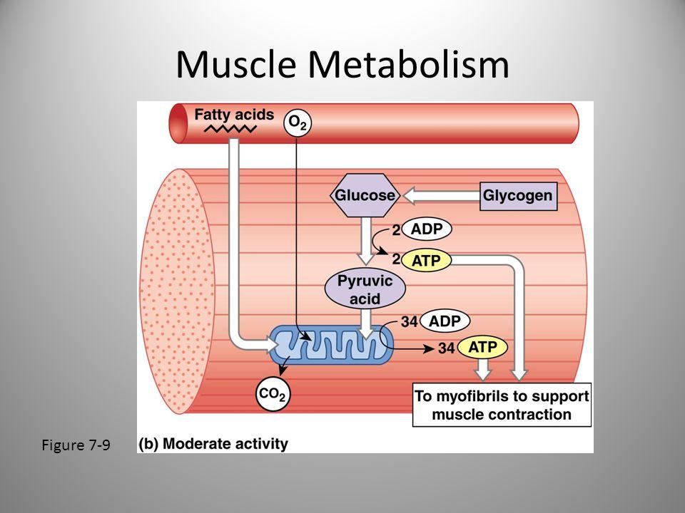 Muscle Metabolism Figure 7-9
