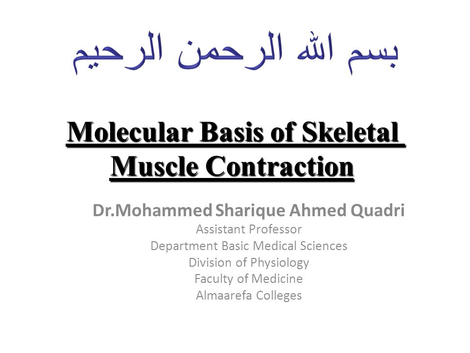 Molecular Basis of Skeletal Muscle Contraction Dr.Mohammed Sharique Ahmed Quadri Assistant Professor Department Basic Medical Sciences Division of Physiology Faculty of Medicine Almaarefa Colleges
