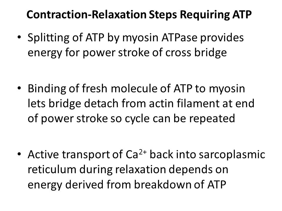Contraction-Relaxation Steps Requiring ATP Splitting of ATP by myosin ATPase provides energy for power stroke of cross bridge Binding of fresh molecule of ATP to myosin lets bridge detach from actin filament at end of power stroke so cycle can be repeated Active transport of Ca 2+ back into sarcoplasmic reticulum during relaxation depends on energy derived from breakdown of ATP