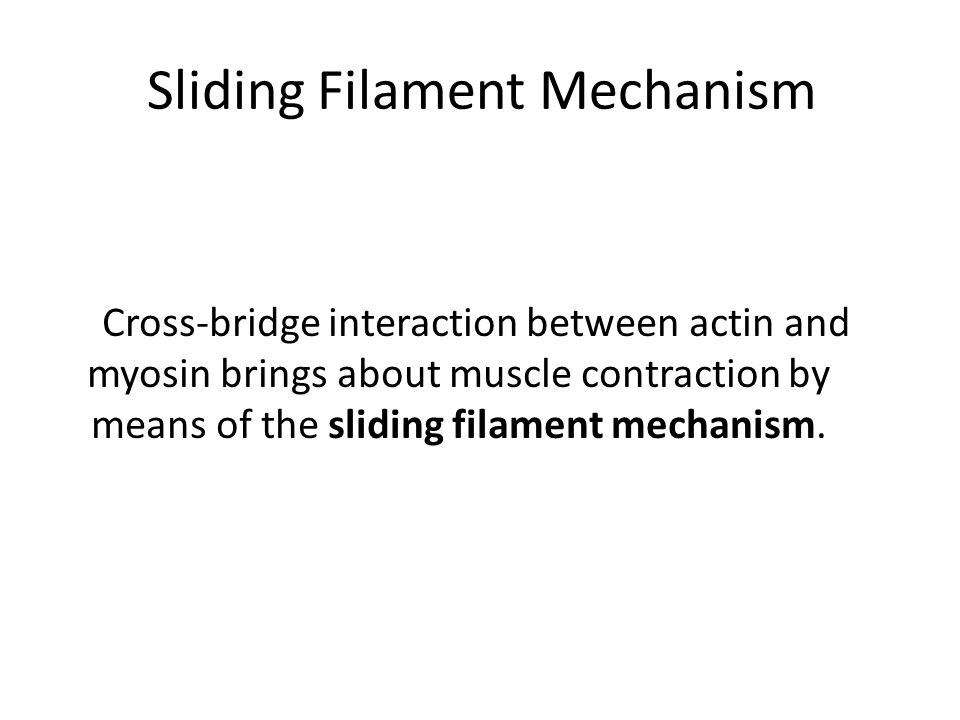Sliding Filament Mechanism Cross-bridge interaction between actin and myosin brings about muscle contraction by means of the sliding filament mechanism.
