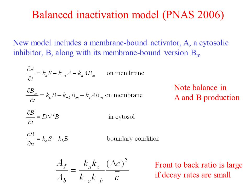 New model includes a membrane-bound activator, A, a cytosolic inhibitor, B, along with its membrane-bound version B m Balanced inactivation model (PNAS 2006) Note balance in A and B production Front to back ratio is large if decay rates are small