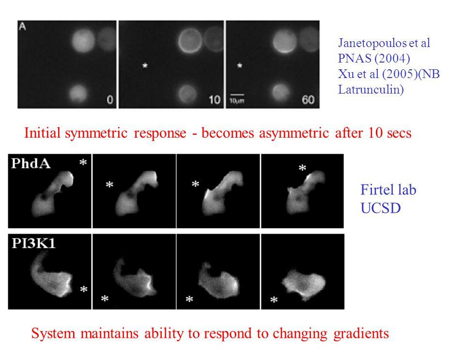 Initial symmetric response - becomes asymmetric after 10 secs Janetopoulos et al PNAS (2004) Xu et al (2005)(NB Latrunculin) System maintains ability to respond to changing gradients Firtel lab UCSD