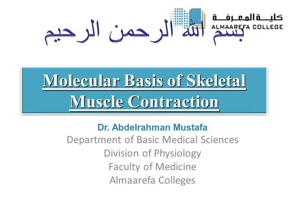 Molecular Basis of Skeletal Muscle Contraction Dr.