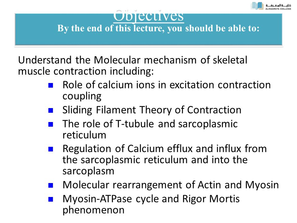 Objectives By the end of this lecture, you should be able to: Understand the Molecular mechanism of skeletal muscle contraction including: Role of calcium ions in excitation contraction coupling Sliding Filament Theory of Contraction The role of T-tubule and sarcoplasmic reticulum Regulation of Calcium efflux and influx from the sarcoplasmic reticulum and into the sarcoplasm Molecular rearrangement of Actin and Myosin Myosin-ATPase cycle and Rigor Mortis phenomenon
