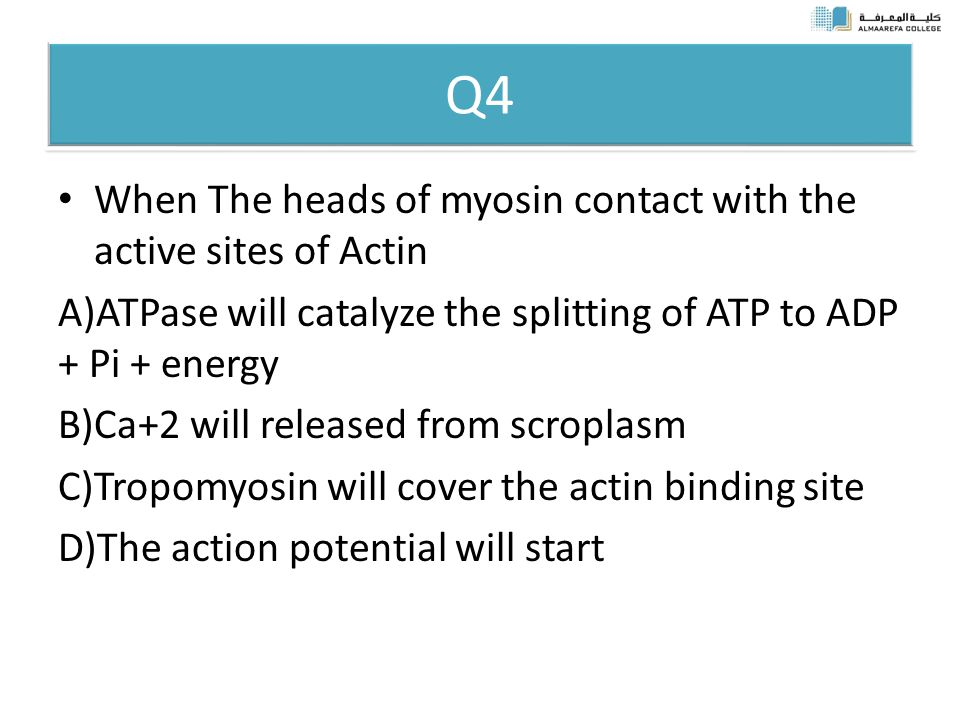 Q4 When The heads of myosin contact with the active sites of Actin A)ATPase will catalyze the splitting of ATP to ADP + Pi + energy B)Ca+2 will released from scroplasm C)Tropomyosin will cover the actin binding site D)The action potential will start
