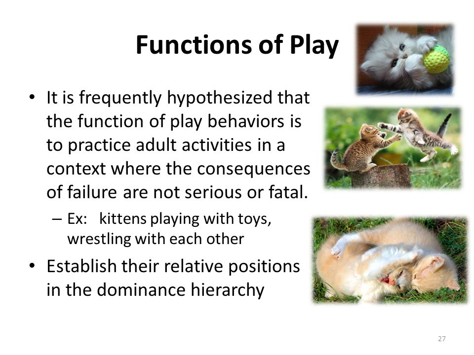 Functions of Play It is frequently hypothesized that the function of play behaviors is to practice adult activities in a context where the consequence