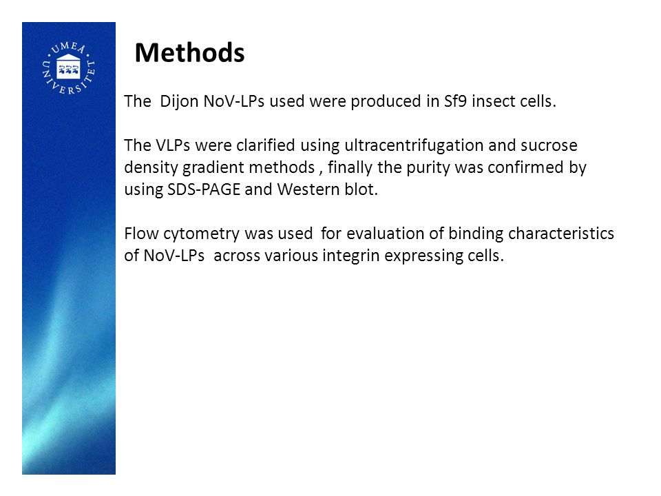 Methods The Dijon NoV-LPs used were produced in Sf9 insect cells.
